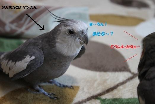 IMG_9733.jpg