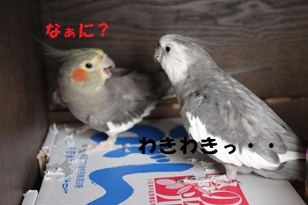 IMG_9782.jpg