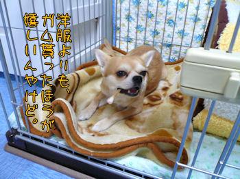 komusan_0105_005