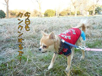 komusan_0118_003