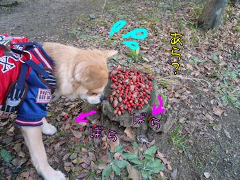 komusan_0125_002