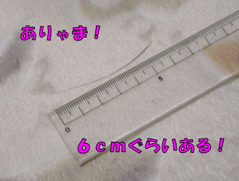 komusan_0128_003
