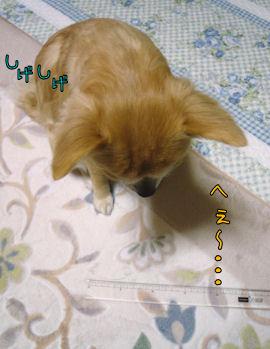 komusan_0128_004