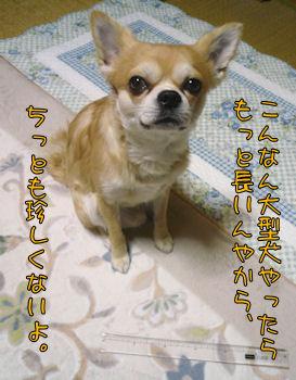 komusan_0128_005