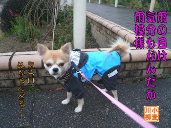 komusan_0129_001