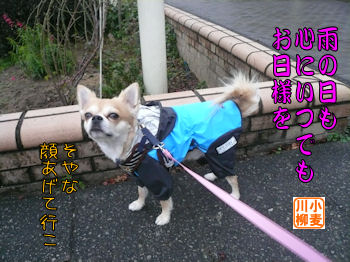 komusan_0129_002