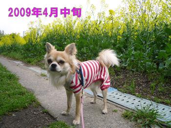 komusan_0130_005