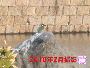 komusan_0203_004