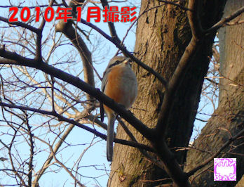 komusan_0203_006