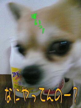 komu1119002