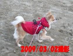 komu1215001