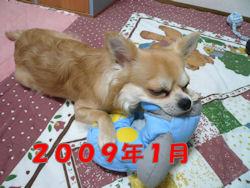 komu1230001