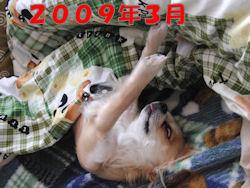 komu1230002