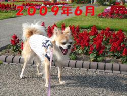 komu1230004