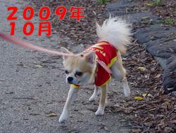 komu1230007