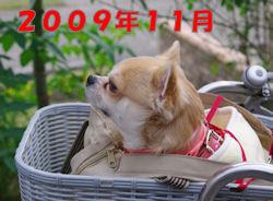 komu1230008