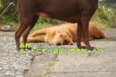b4_20091127003803.jpg