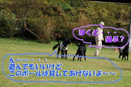 b7_20091127003801.jpg