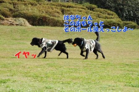 c12_20091127004030.jpg