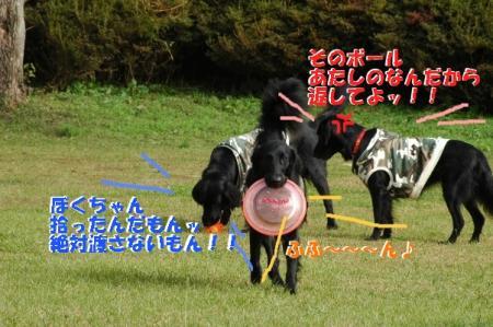 c1_20091127003859.jpg