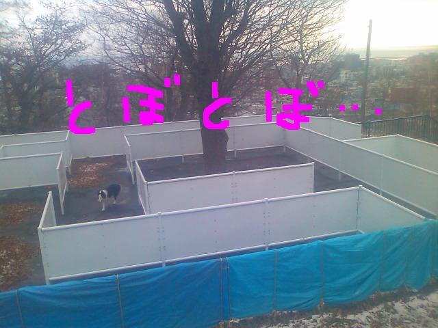 CARTT73D_20091130211654.jpg