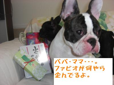 2_20091227005215.jpg