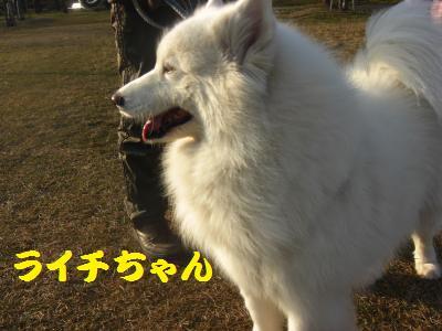 5_20091231002255.jpg