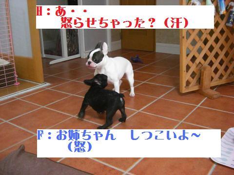 CIMG4248_convert_20091121201917.jpg