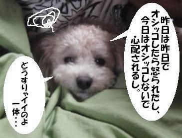 20091127-zeon.jpg