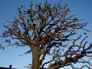 20091208-tree.jpg