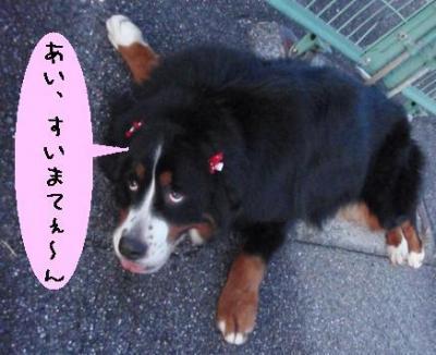 20091209-muku4.jpg