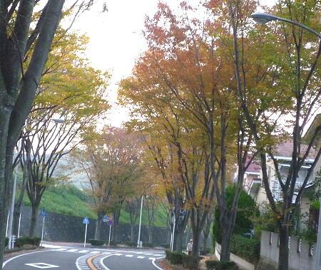 近所の街路樹