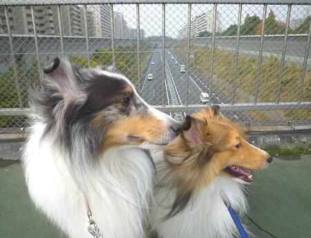 いつもの陸橋