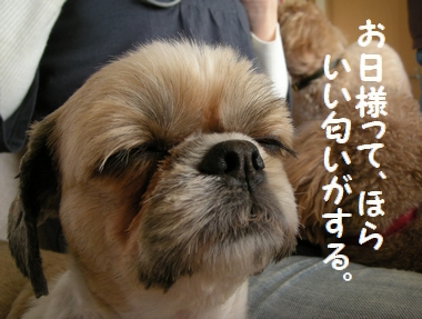 043_20091218131426.jpg