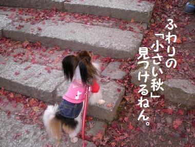 089_20091203164247.jpg