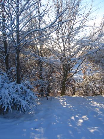 sunlight+in+the+snow_convert_20100106051252.jpg