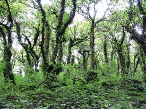 01広葉樹林