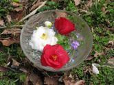 08春の花ボール