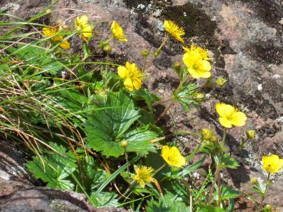 flower_20110829114759.jpg