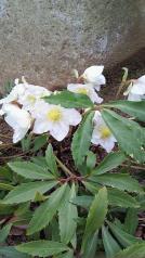 みーちゃんの花3