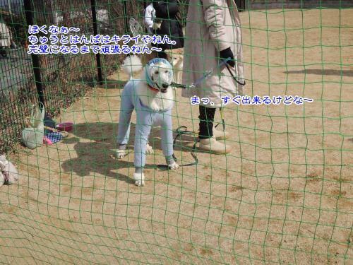 DSCN0837_convert_20130226211817.jpg