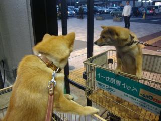 ヘンな犬いますよー!
