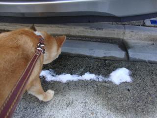 雪ってナニ??