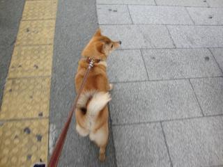 ご機嫌歩き