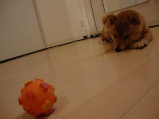 ボール遊びか…。