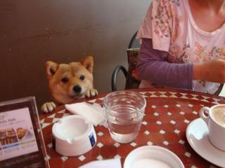 ボクのお皿は?