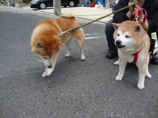 リク&ヤマト