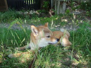 涼しい芝生