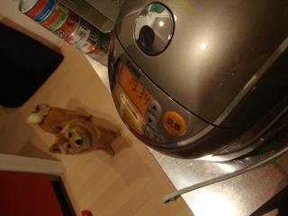 炊飯器って?