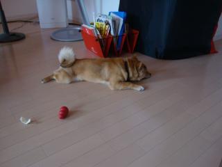 シャンプー疲れ